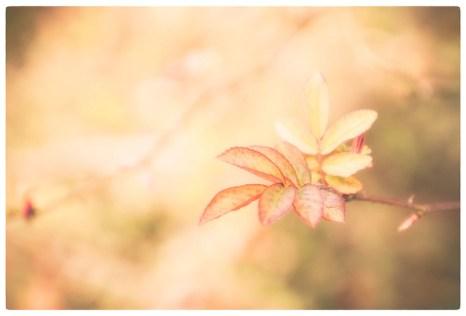 Plant frills