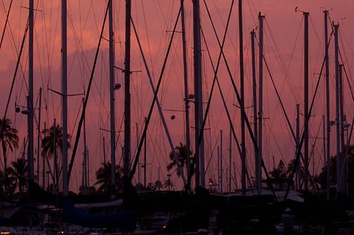 masts at Ala Wai