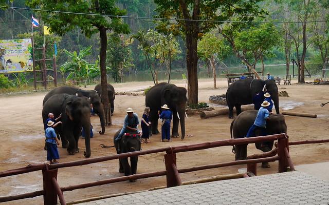 Thailand Academy