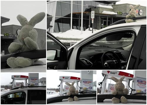 Travel Bunny Says