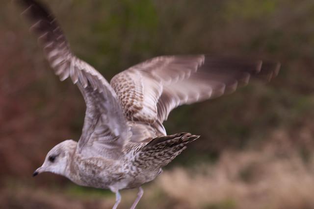 seagull13_ 051