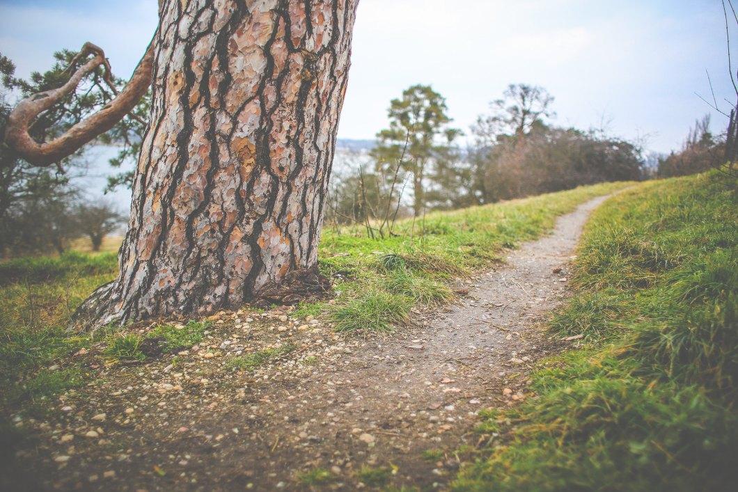 Imagen gratis de un camino junto a un arbol