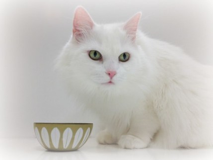 Coconut oil is one of the latest superfoods for both humans and pets. Keep reading to find out what benefits it has for your cat's health and wellness!