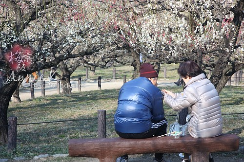 大阪城公園梅林3