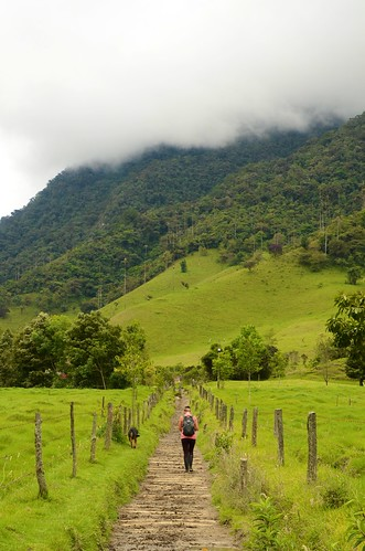 Tuva in Valle de Cocora