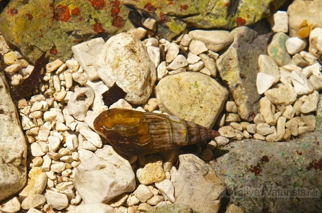 snail 0010 Palenque, Chiapas, Mexico