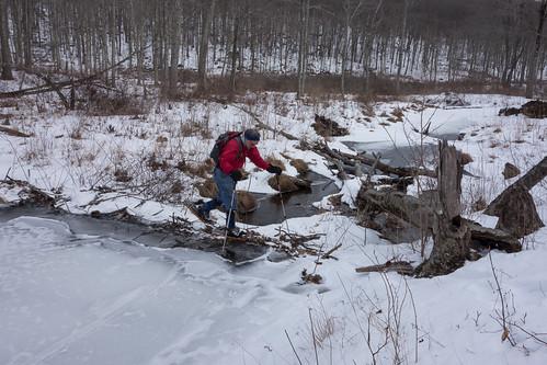 Loren crossing beaver dam