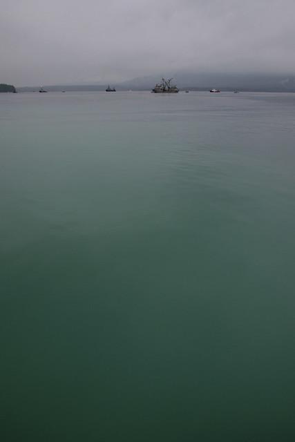 Herring Spawn - Baynes Sound