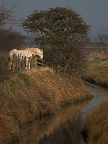 White horse and drain