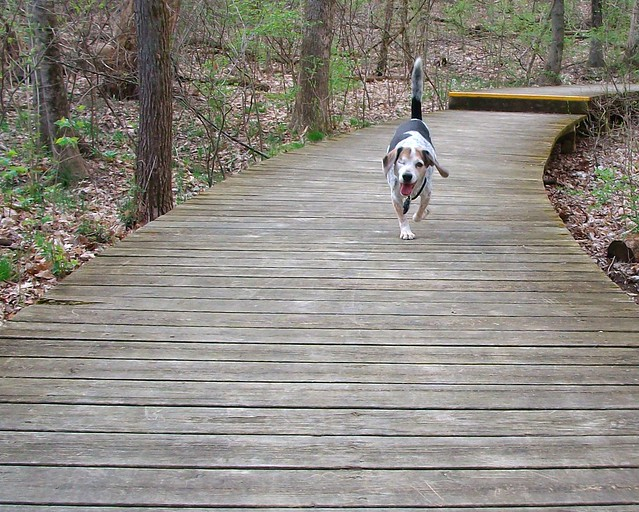 Recall on boardwalk
