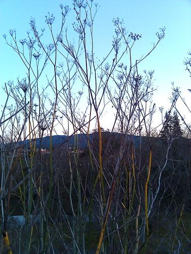 rainbow branches dark to light