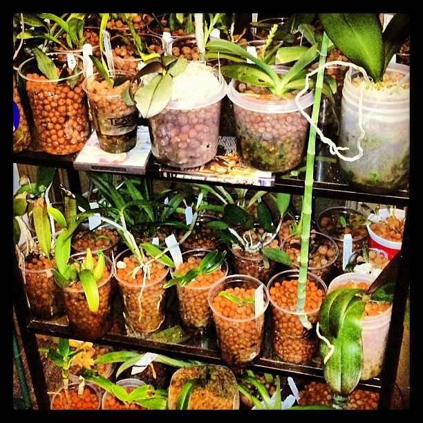 Plants plants plants plants...ORCHIDS, ORCHIDS!! Thank god it's nearly spring! #plants #orchids #growAreas