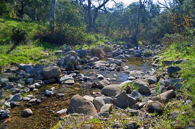 The first of nine crossings of Trout Creek is in a small meadow.