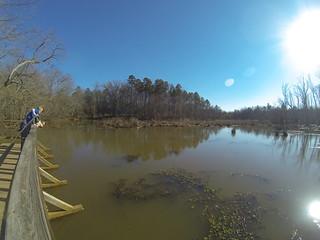 Lake Connestee Overlook