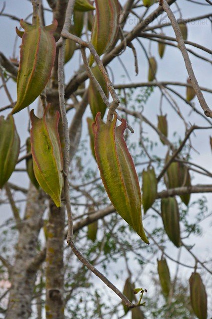 tree 0009 cenotes near Merida, Yucatan, Mexico