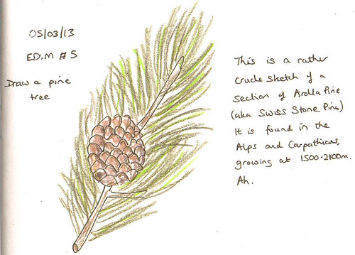 EDiM # 5 Pine