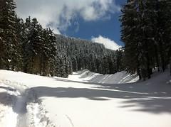 Aufstieg Lutterkopf durch den Wald