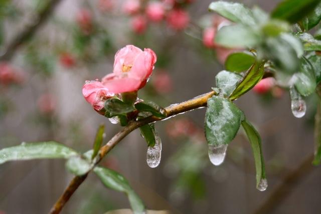 frozen april