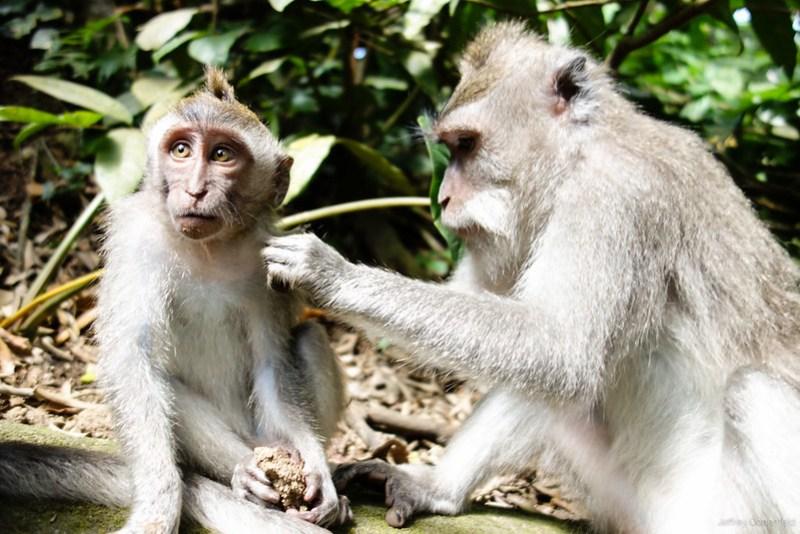 2013-03-22 Monkey Forrest Ubud - DSC00711-2-FullWM