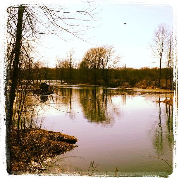 Apr 25 - life is... {beautiful} #fmsphotoaday #princeedwardcounty #water #spring