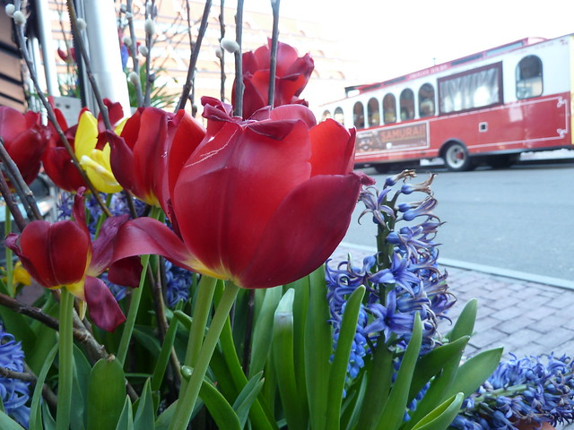Tulips and trolleys