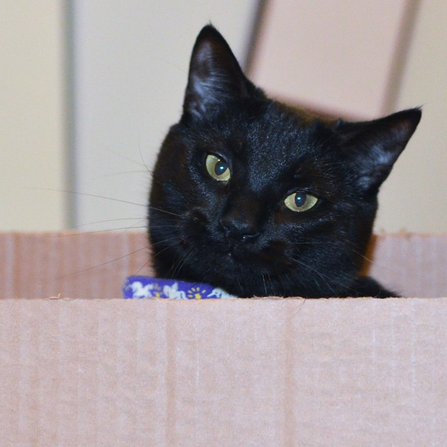 Luna in the Box
