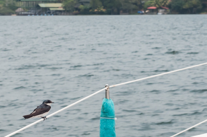 Sailing Rio Dulce-14