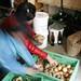 Erdäpfel & Zwiebel der solidarischen Landwirtschaft