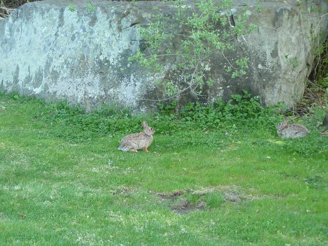 Huntin wabbits