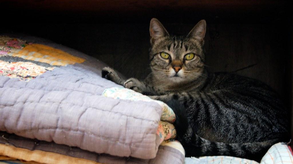 Miss Kitty's Nook