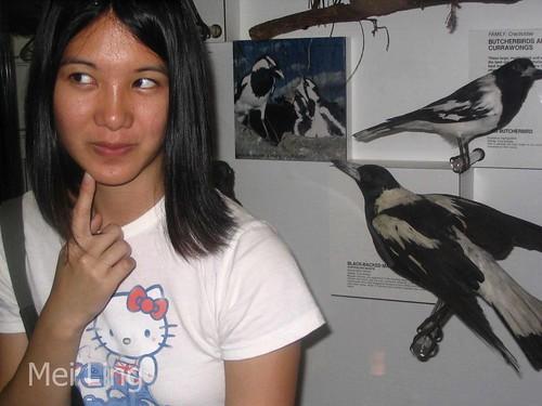 Control de plagas de aves. Maneras naturales de asustarlos del jardín