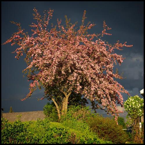 Before the Storm by Davidap2009