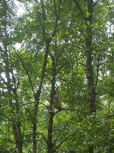 Hutan Mangrove Tarakan