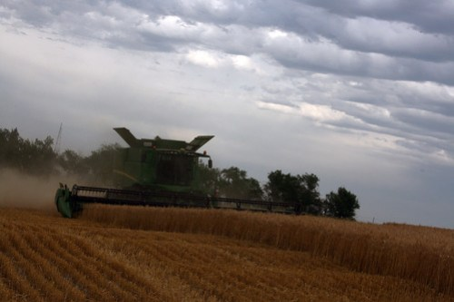 A combine cuts over a rolling hill in our field