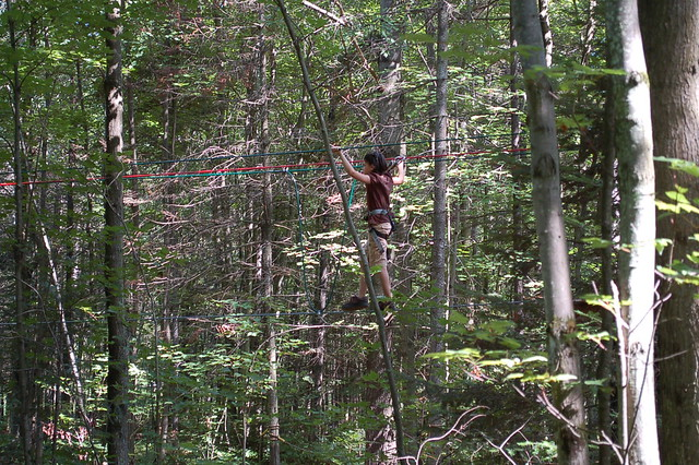 tree-link