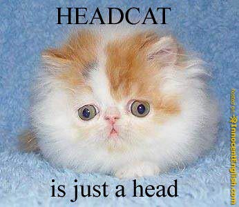 an image of funny%20cats funny-cat-with-big-head | Flickr - Photo Sharing!