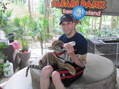 Namuang Safari Tiger Feeding by holidaypointau