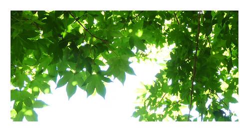unter Bäumen IV