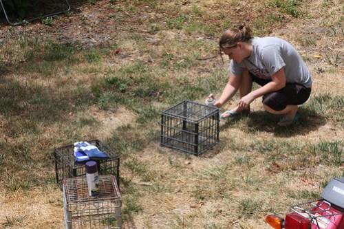 House Work (July 20, 2012) 003