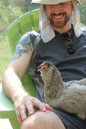 20120707. Chicken Watch 2012 (aka over 100 degrees).