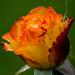 20120805-_DSC0119.jpg