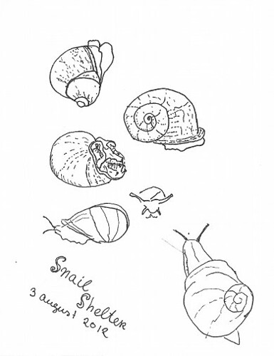 Sketch of a snail