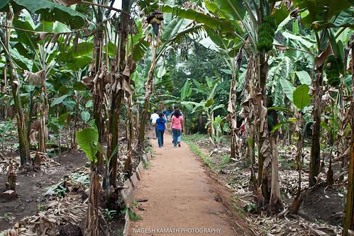 Way to Mango Tree restaurant