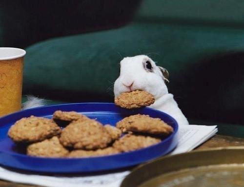 Кролик и печенье by Juriy2012