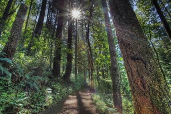 Eagle Creek Trail - Colombia River Gorge - Copyright Nick Nieto