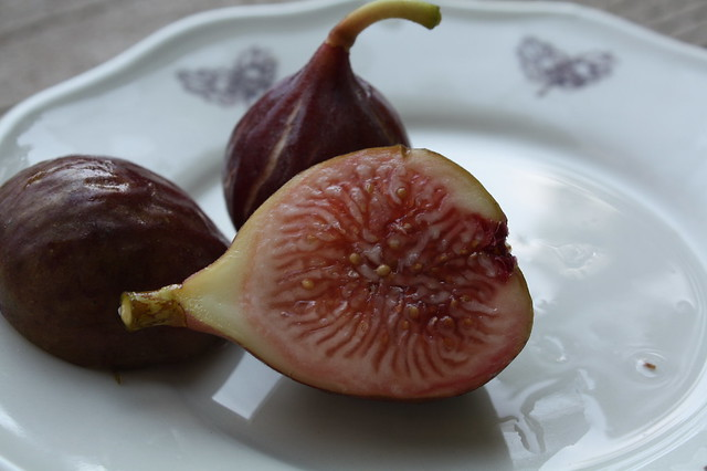 Real live figs from our backyard!