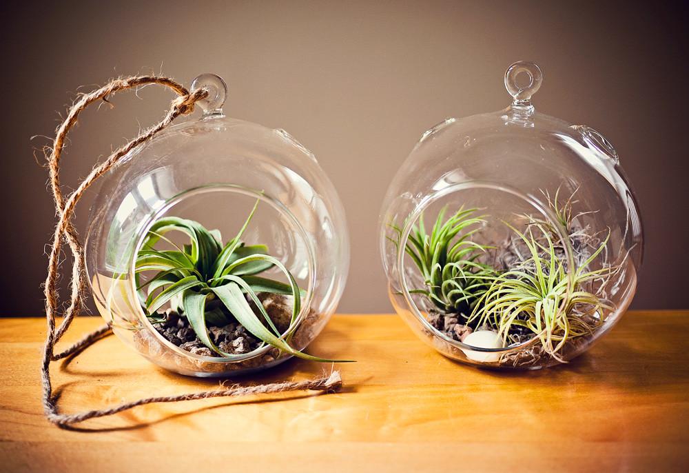 Air Plant Globe Terrarium 4