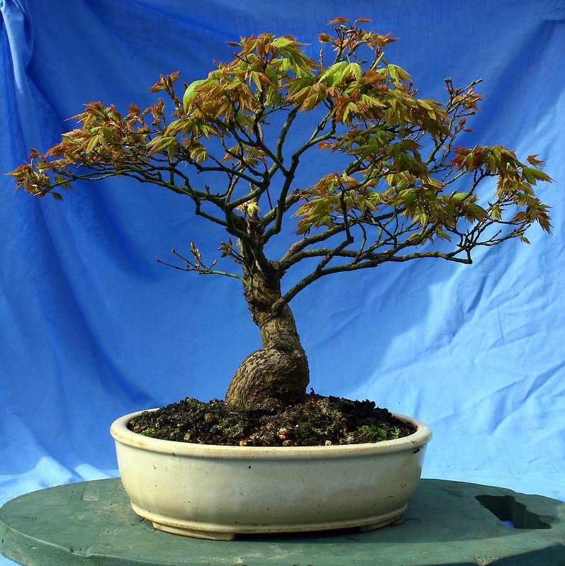 New Leaf Aug 2012