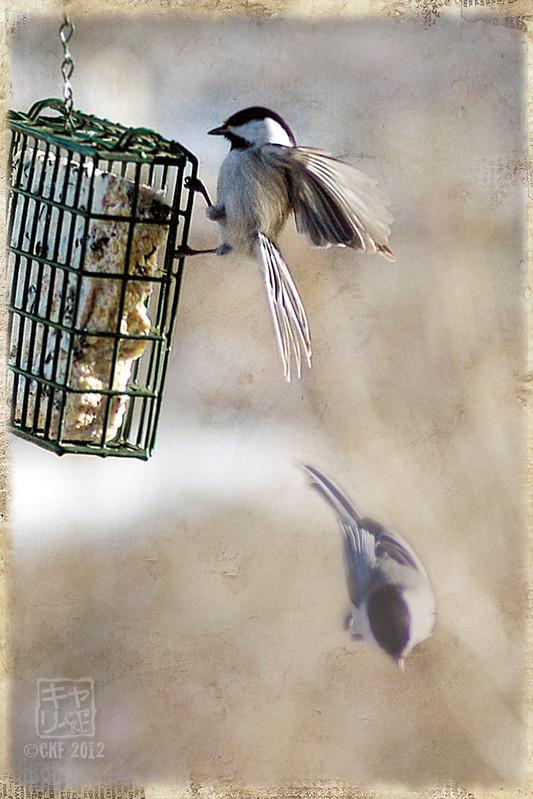 Avian Acrobat