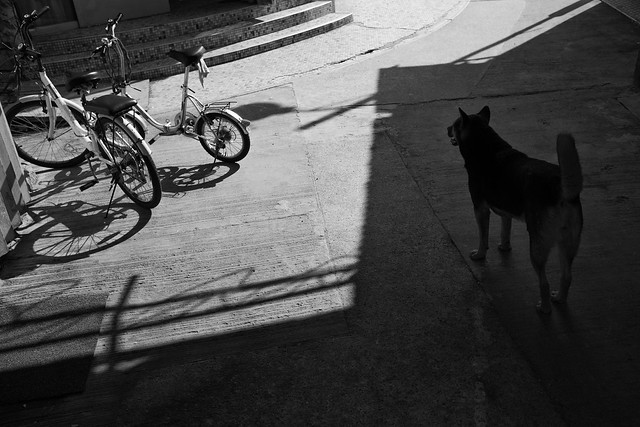 Dogs at the street 8